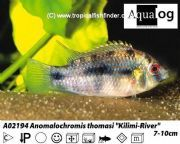 ABACUS AQUATICS STOCK UPDATE