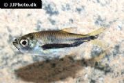 Stock list update: Amwell Aquatics@ Epping
