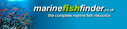 Marine Fish Finder