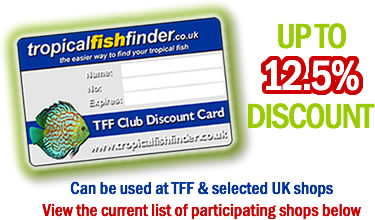 The TFF Card